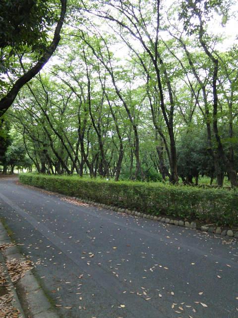 庄内緑地公園の周回コース♪